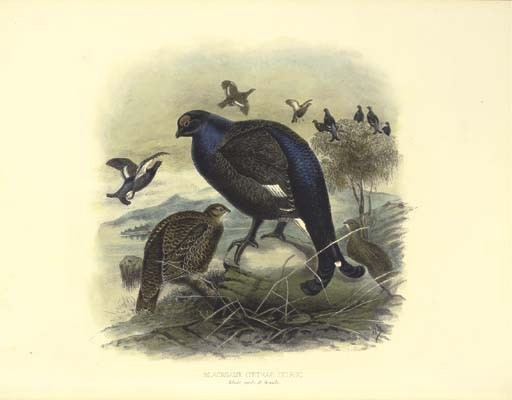 MILLAIS, John Guille (1865-1931). <I>The Natural History of British Game Birds</I>. London: