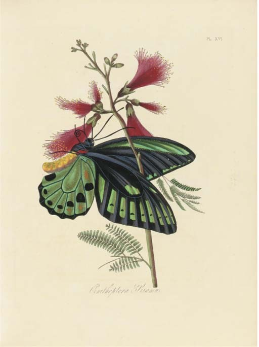 DONOVAN, Edward (1768-1837). <I>Natural History of the Insects of India</I> edited by J.O.