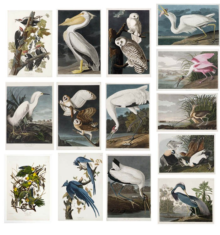AUDUBON, John James (1785-1851). <I>The Birds of America; from Original Drawings</I>. London: