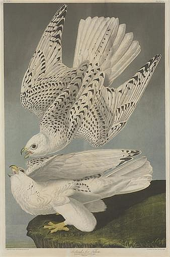 AFTER JOHN JAMES AUDUBON BY JULIUS BIEN (1829-1909)
