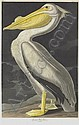 AFTER JOHN JAMES AUDUBON BY ROBERT HAVELL, Robert Jr Havell, Click for value