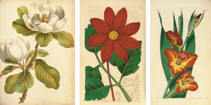 EDWARDS, Sydenham Teak (ca 1769-1819), continued by John LINDLEY (1799-1865). <I>The Botanical</I>