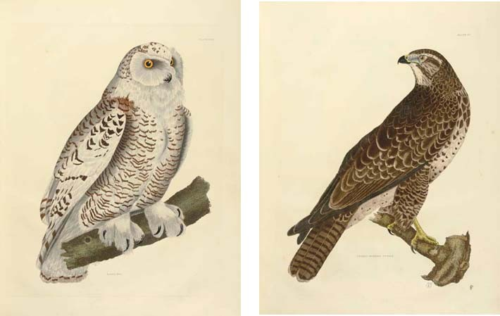 SELBY, Prideaux John (1788-1867). <I>Illustrations of British Ornithology.</I> Edinburgh and