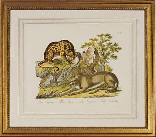 Descrizioni degli Animali: Eight Plates