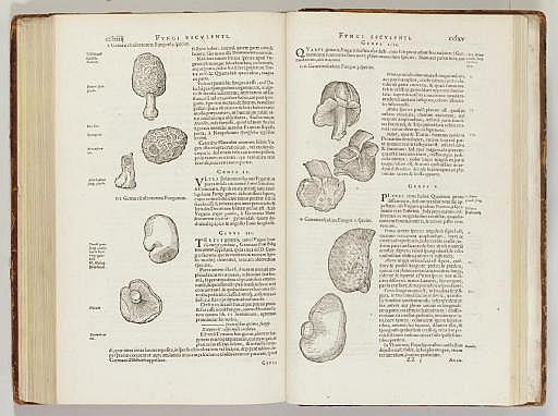 [L'ECLUSE, Charles de (1526-1609)]. CLUSIUS, Carolus.  Rariorum Plantarum Historia...  Antwerp: J. Moretus, 1601.