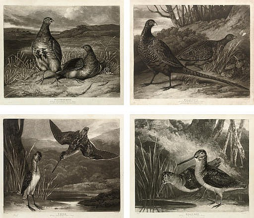 British Feather Game: Pl.1 Partridges; Pl.2 Pheasants; Pl.3 Snipes; and Pl.4 Woodcocks