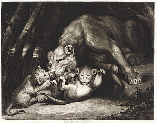 Lioness and Whelps