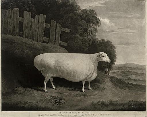The Worcestershire Ewe