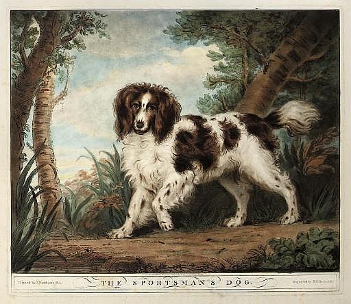 The Sportsman's Dog