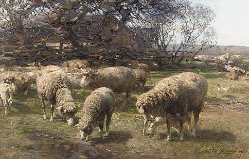 Sonniger Märzmorgen: sheep grazing near a farm