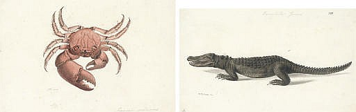 A crocodile ( crocodilius javier ); and A crab ( cancer setanus )