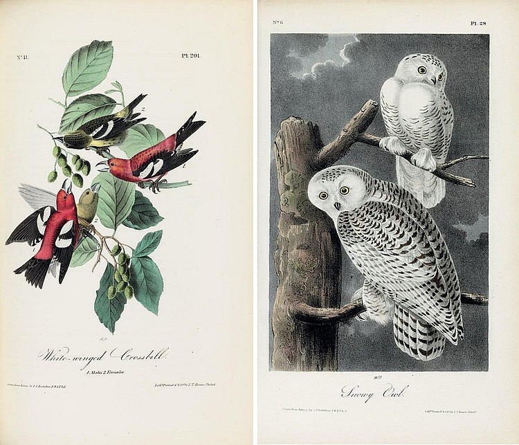 AUDUBON, John James (1785-1851).  The Birds of America, from Drawings Made in the United States and their Territories . New York: J.J. Audubon; Philadelphia: J.B. Chevalier, [1839-] 1840-1844.