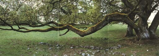 Andy Goldsworthy (b. 1956)