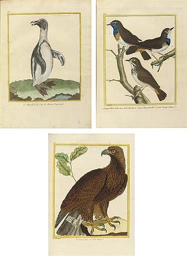 BUFFON, Georges-Louis Marie Leclerc, comte de (1707-1788).  Histoire Naturelle des Oiseaux . Paris: Imprimerie Royale (I-VI), suivant la copie de l'Imprimerie Royale (VII-X), 1770-1778-1783-1784-1786.