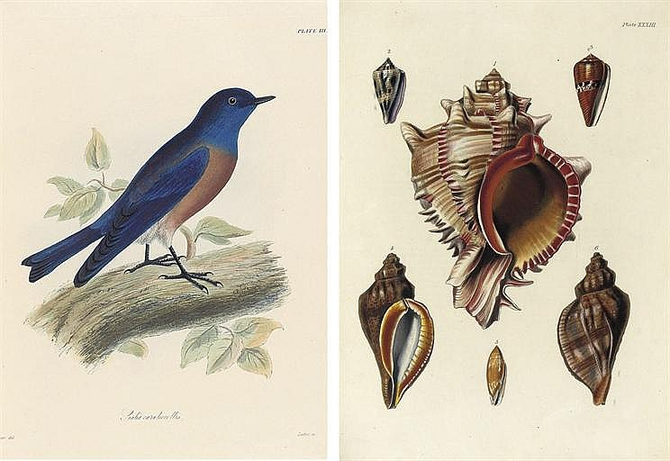 BEECHEY, Frederick William (1796-1856).  The Zoology of Captain Beechey's Voyage ... performed in Her Majesty's Ship Blossom ... in the Years 1825-28 . London: Henry G. Bohn, 1839.