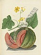 BROOKSHAW, George (1751-1823).  Pomona Britannica; or, a collection of the most esteemed fruits at present cultivated in this country.  London: T. Bensley for Longman, Hurst, Rees, Orme & Brown and John Lepard, [1816-]1817., George Brookshaw, Click for value