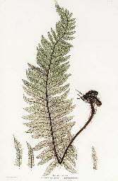 THOMAS MOORE (1827-1901)
