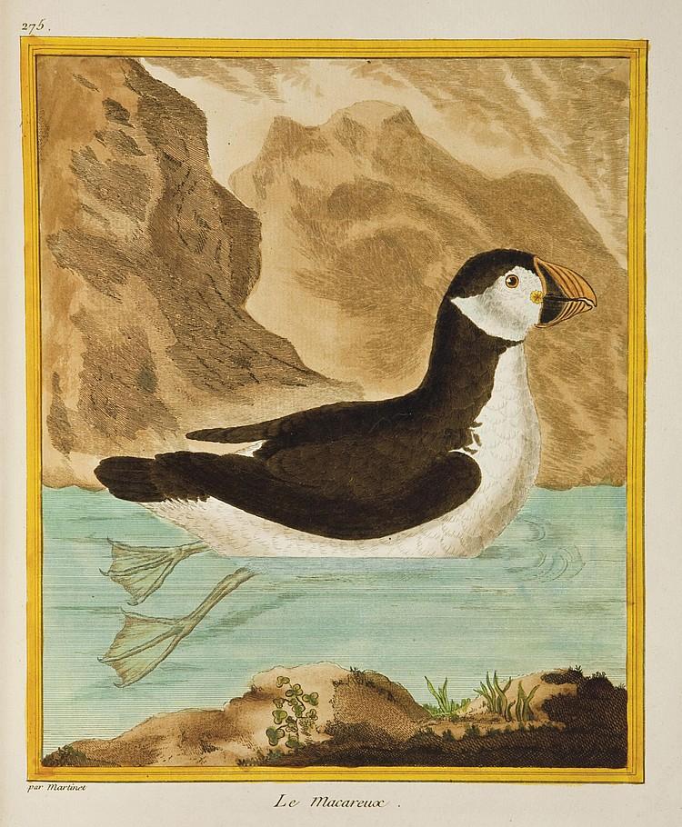BUFFON, Georges Louis Marie Leclerc, comte de (1707-1788). [ Histoire naturelle des oiseaux.  Paris: Imprimerie royale, 1770-1786.]