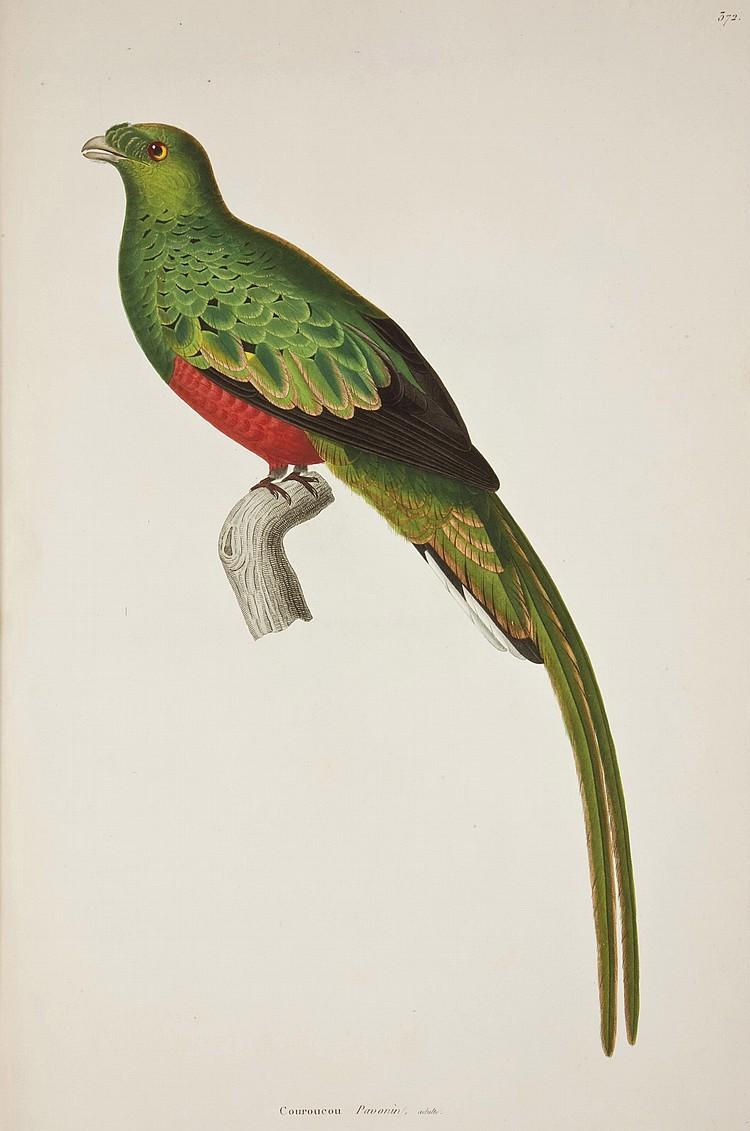TEMMINCK, Coenraad Jacob (1778-1858) & MEIFFREN LAUGIER DE CHARTROUSE. Nouveau recueil de planches coloriées d'oiseaux. Paris: Belin pour Levrault; Amsterdam: Legras, Imbert et Co., [1820-] 1838 [-1839].
