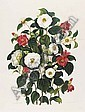CURTIS, Samuel (1779-1860). <I>Monograph on the Genus Camellia... the whole from original</I>, Samuel Curtis , Click for value