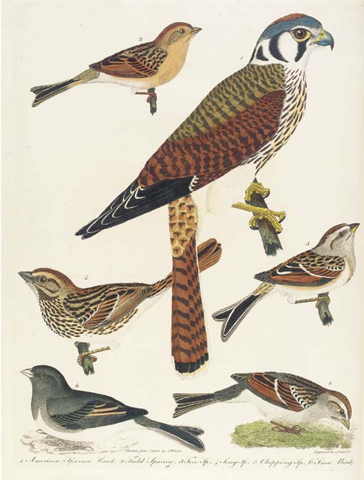 WILSON, Alexander (1766-1813). <I>American Ornithology; or, the natural history of the birds of</I>