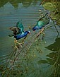 Purple Gallinules, Michael Jackson, Click for value