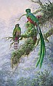 Quetzals, Kim Brooks, Click for value