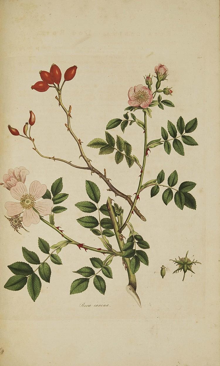 CURTIS, William (1746-1799). Flora Londinensis; or Plates and Descriptions of Such Plants as Grow Wild in the Environs of London . Londres: pour l'auteur et chez B. White & fils, 1777-1798.