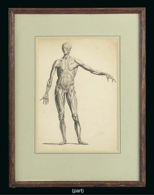 Seven 19th-Century anatomical pictures,