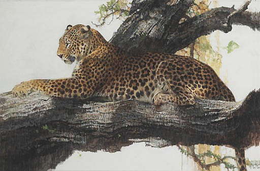 Leopard in Light and Shade