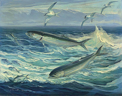 Bluefish Jumping