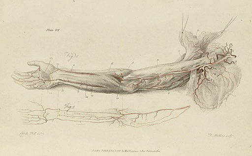 BELL, Charles (1774-1842). Engravings of the arteries, illustrating the second volume of anatomy of the human body, by J. Bell, surgeon; and serving as an introduction to the surgery of the arteries . London: C. Whittingham for Longman and