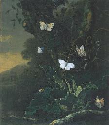 Otto Marseus van Schrieck (Nijmegen 1619-1678 Amsterdam)