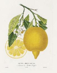 RISSO, Joseph Antoine (1777-1845) and Pierre Antoine POITEAU (1766-1854). Histoire naturelle des Orangers. Paris: Henri Plon and G. Masson, 1872.