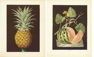 BROOKSHAW, George (1751-1823). Pomona Britannica; or, a Collection of the most esteemed fruits at present cultivated in this country. London: T. Bensley for the author, published by White, Cochrane and Co., E. Lloyd and W. Lindsell, [1804-]1812.
