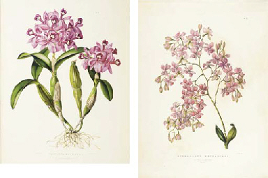 BATEMAN, James (1811-1897). The Orchidaceae of Mexico and Guatemala. London: J. Ridgway & Sons for the author, [1837]-1843.