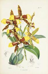 BATEMAN, James (1811-1897). A Monograph of Odontoglossum. London: L.Reeve & Co., [1864-]1874.