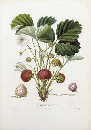 POITEAU, Pierre Antoine (1766-1854). Pomologie Fran‡aise. Recueil des plus beaux fruits cultiv's en France. Paris: Langlois and Leclercq, [1846].
