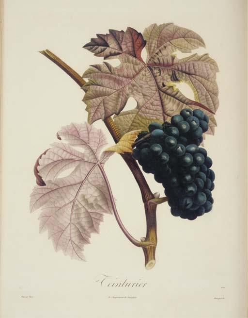 POITEAU, Pierre-Antoine (1766-1854). <I>Pomologie Française. Recueil des plus beaux fruits</I>