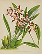 The Orchid Album: Six Plates, John Lee Fitch, Click for value