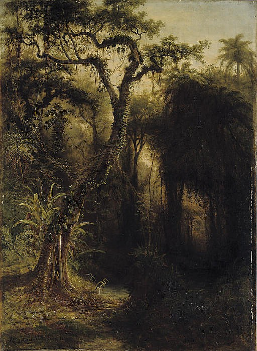 Rainforest above Santiago de Cuba