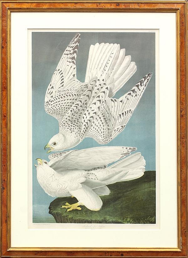Chromolithograph, after John James Audubon,