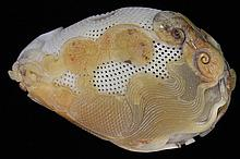 Chinese Stone Carving, Goldfish