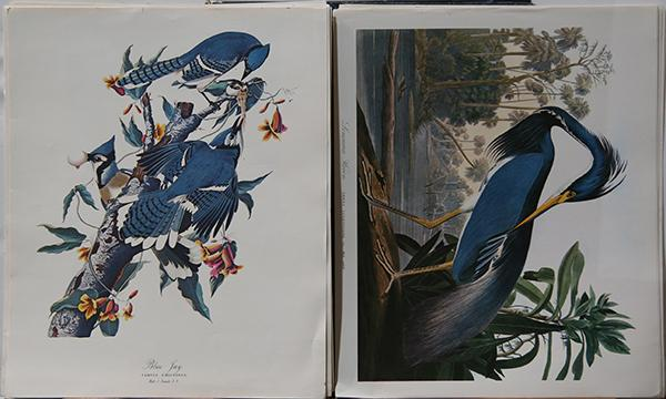 Portfolio, After John James Audubon