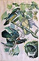 Litho, Julius Bien, Summer or Wood Duck, Audubon