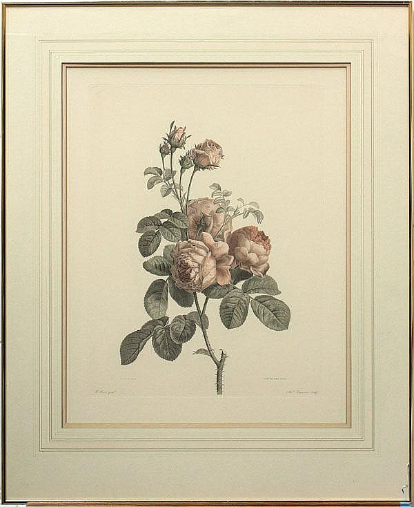 Engraving, Alexander Chaponnier, Pink Roses