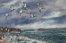 Tom McNickle watercolor Mallards Alighting