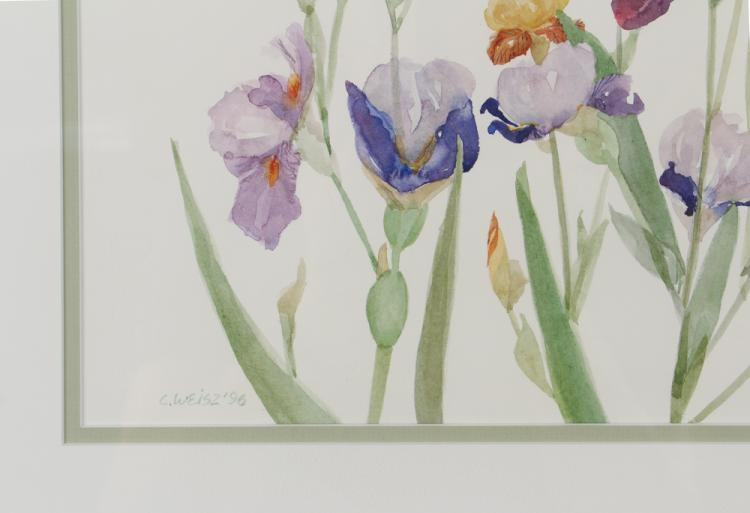 Cathy Weisz 3 Contemporary Botanical Watercolors