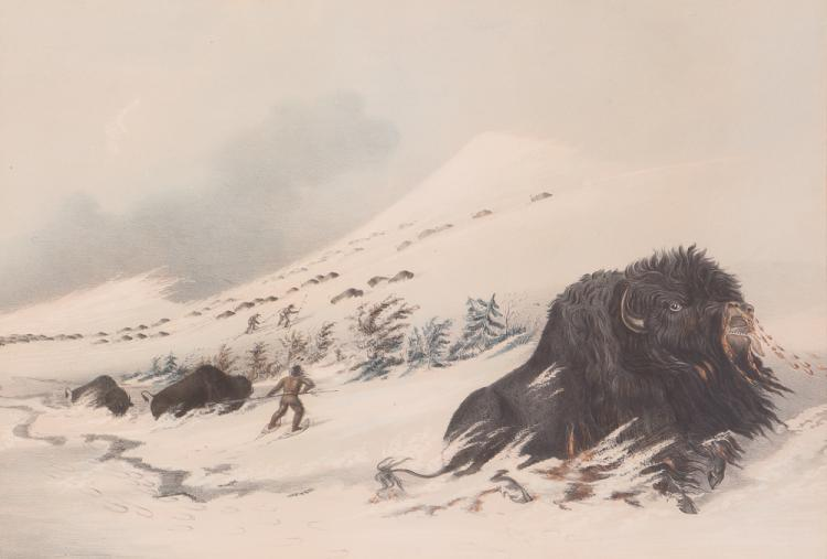 George Catlin DYING BUFFALO BULL IN SNOW DRIFT