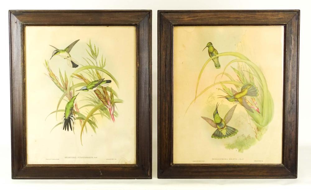 Pair J. Gould Bird Prints